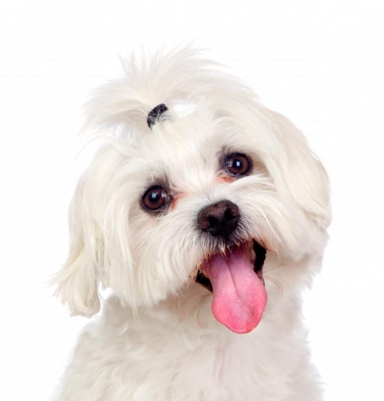 Onde Comprar Plataforma Anti-afogamento de Cão Jabaquara - Plataforma Anti-afogamento para Piscina