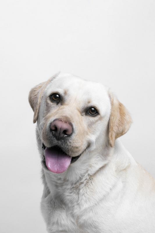Onde Comprar Plataforma Anti-afogamento para Cachorro Filhote Instituto da Previdência - Plataforma Anti-afogamento para Cachorro Filhote