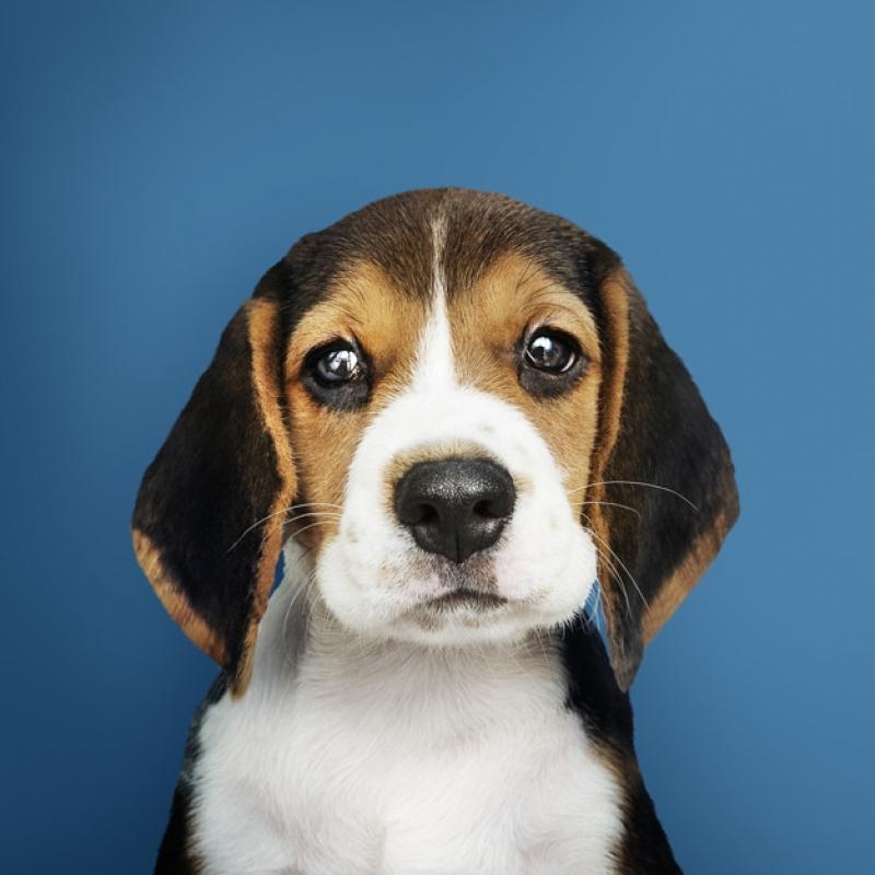 Onde Comprar Plataforma Anti-afogamento para Cães Pinheiros - Plataforma Anti-afogamento para Cachorro Filhote