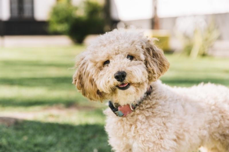 Onde Comprar Plataforma para Piscinas Anti-afogamento de Cães Nossa Senhora do Ó - Plataforma Anti-afogamento para Cachorro Filhote