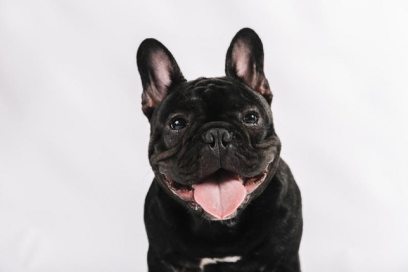 Onde Comprar Plataforma para Piscinas Anti-afogamento de Cão Araguari - Plataforma Anti-afogamento para Cachorro Filhote