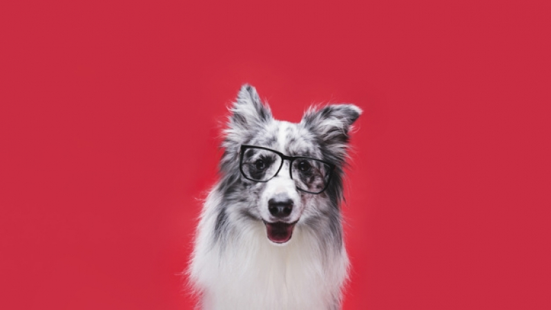 Onde Vende Plataforma Anti-afogamento Canino Santo André - Plataforma Anti-afogamento de Cão