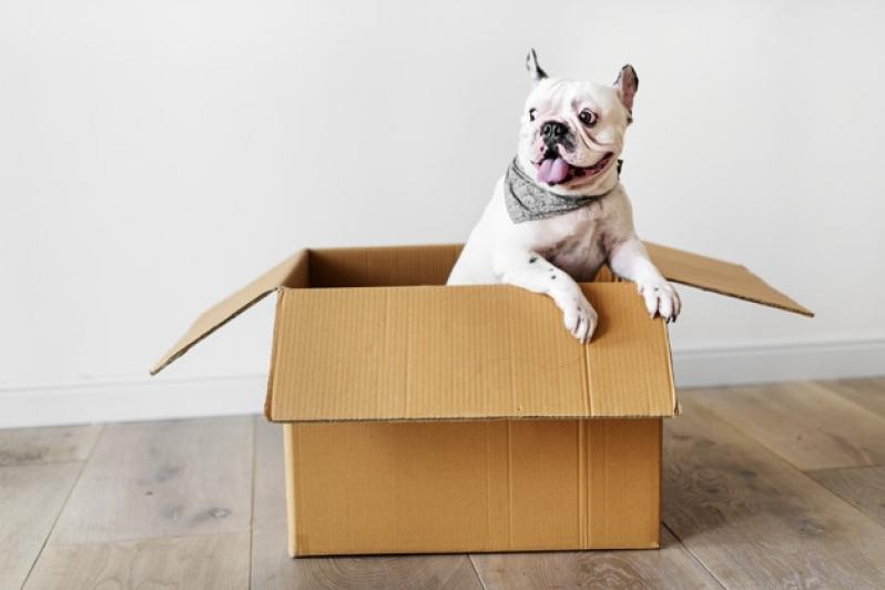 Onde Vende Plataforma Anti-afogamento para Cachorro Gávea - Plataforma Anti-afogamento para Cachorro Filhote