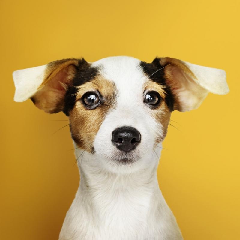 Onde Vende Plataforma Anti-afogamento para Cães Jaguaré - Plataforma Anti-afogamento para Piscina