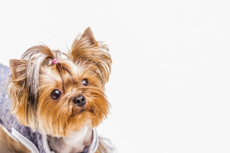 Onde Vende Plataforma para Piscinas Anti-afogamento de Cães Instituto da Previdência - Plataforma Anti-afogamento para Cachorro Filhote
