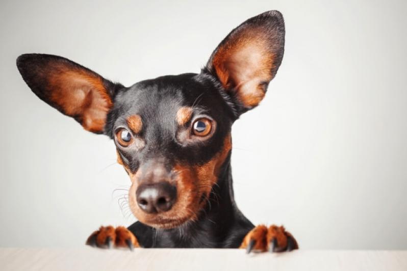 Onde Vende Plataforma para Piscinas Anti-afogamento de Cão Peruíbe - Plataforma Anti-afogamento para Cachorro Filhote
