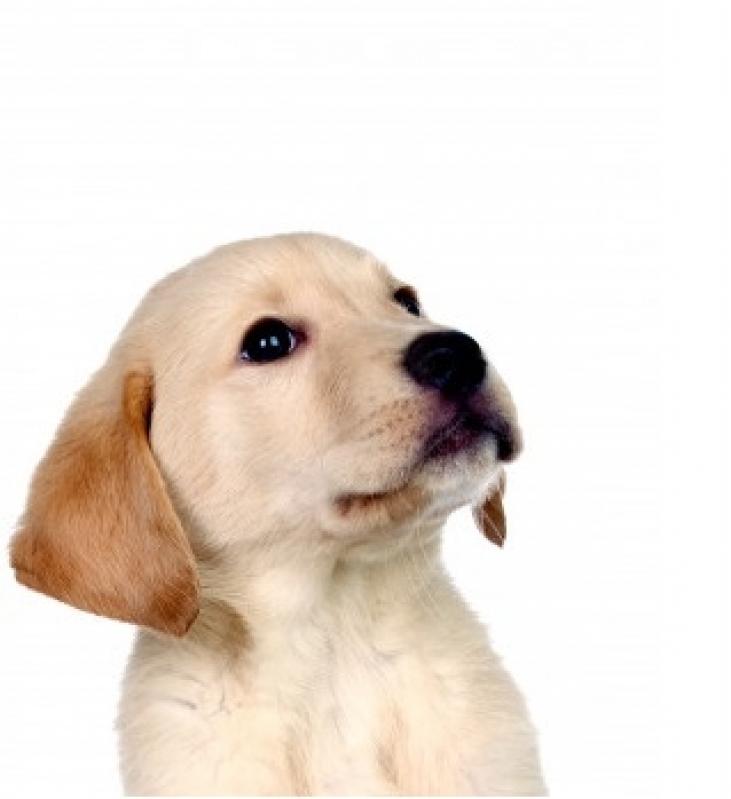 Plataforma Anti-afogamento Canino Preço Bonsucesso - Plataforma Anti-afogamento para Cachorro Filhote