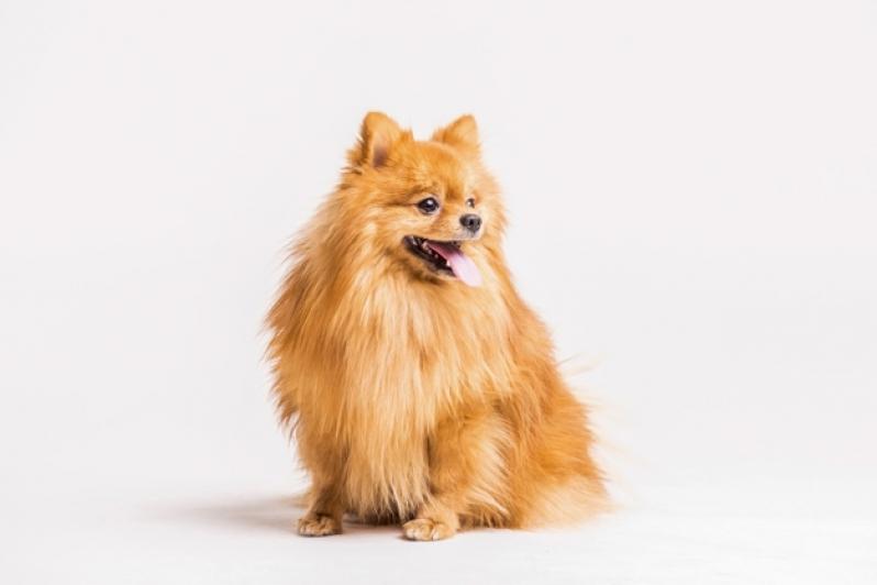 Plataforma Anti-afogamento Canino Guanambi - Plataforma para Piscinas Anti-afogamento de Cães