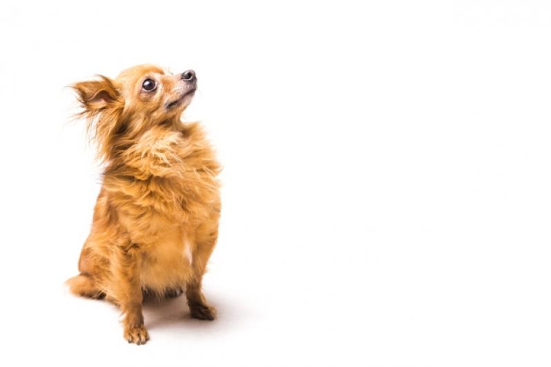 Plataforma Anti-afogamento de Cães para Piscina Preço Senador Canedo - Plataforma Anti-afogamento para Piscina