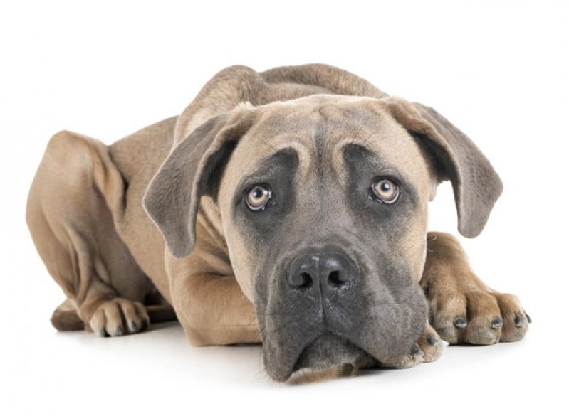 Plataforma Anti-afogamento para Cachorro Filhote Preço Penha - Plataforma Anti-afogamento para Piscina