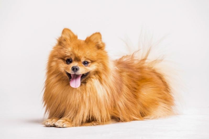Plataforma Anti-afogamento para Cachorro Filhote Bonsucesso - Plataforma Anti-afogamento de Cão