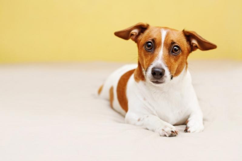 Plataforma Anti-afogamento para Cachorro Preço Higienópolis - Plataforma Anti-afogamento para Cachorro Filhote
