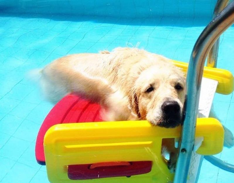 Plataforma Anti-afogamento para Cães Jurubatuba - Plataforma Anti-afogamento para Piscina
