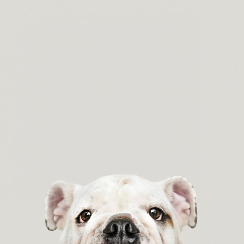 Plataforma Anti-afogamento para Pet Preço Jardim São Luiz - Plataforma Anti-afogamento para Cachorro Filhote