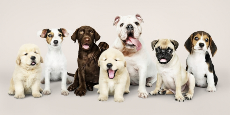 Plataforma Anti-afogamento para Piscina Guararema - Plataforma Anti-afogamento de Cão