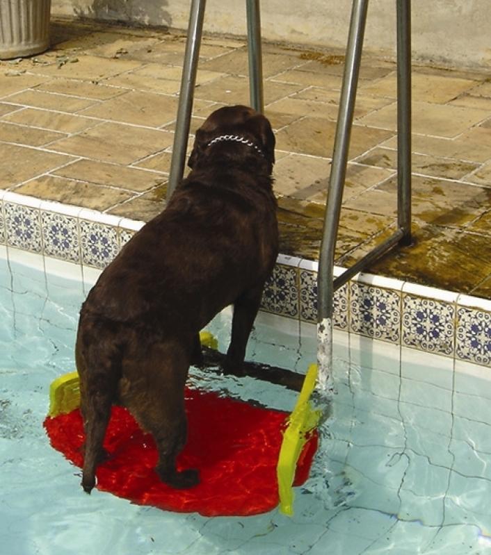 Plataforma para Piscinas Anti-afogamento de Cães Preço Jurubatuba - Plataforma Anti-afogamento de Cão