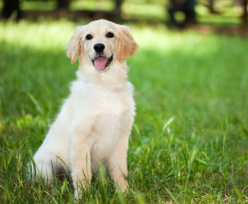 Plataforma para Piscinas Anti-afogamento de Cão Preço República - Plataforma Anti-afogamento para Cachorro Filhote