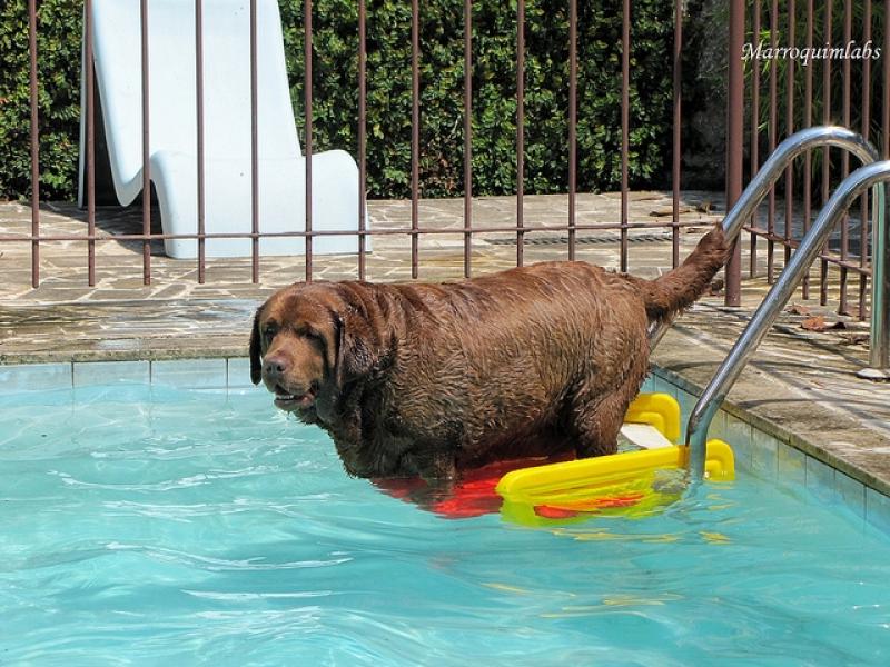 Plataforma para Piscinas Anti-afogamento de Cão Macaé - Plataforma Anti-afogamento de Cão