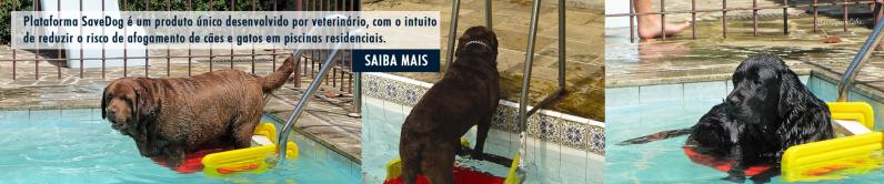 Plataforma Piscina para Cachorro Engenheiro Goulart - Plataforma Pet Escada Piscina