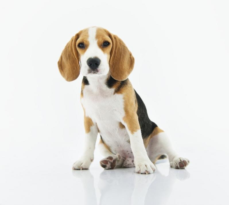 Plataformas Anti-afogamento para Pet Santos - Plataforma para Piscinas Anti-afogamento de Cães