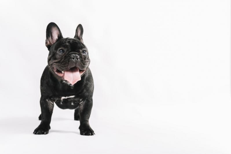 Plataformas Anti-afogamento para Piscina Jataí - Plataforma Anti-afogamento de Cão