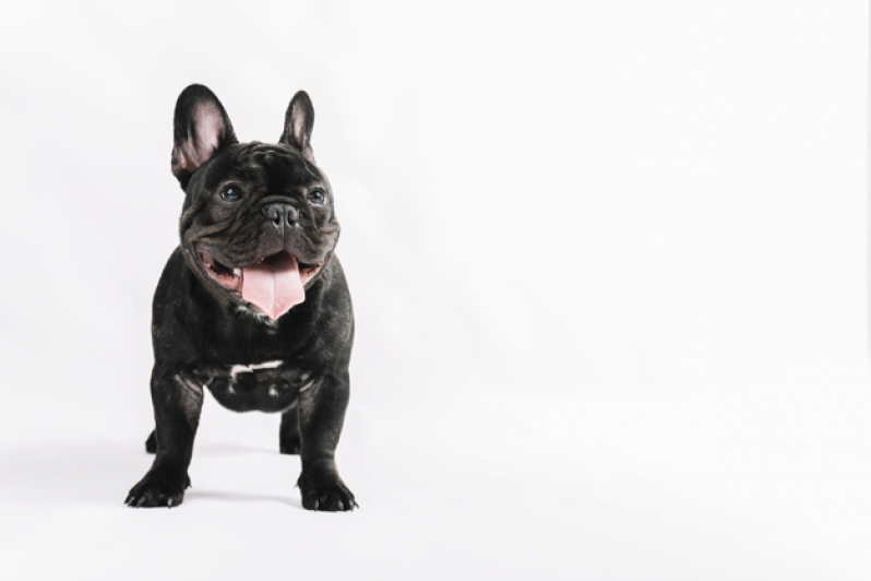Plataformas para Piscinas Anti-afogamento de Cães Itabira - Plataforma Anti-afogamento para Cachorro Filhote