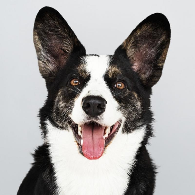 Plataformas para Piscinas Anti-afogamento de Cão Diadema - Plataforma Anti-afogamento para Cachorro Filhote