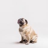 onde comprar plataforma anti-afogamento canino Minaçu