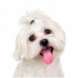 onde comprar plataforma anti-afogamento de cão Jabaquara