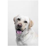onde comprar plataforma anti-afogamento para cachorro filhote Instituto da Previdência