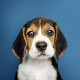 onde comprar plataforma anti-afogamento para cães Francisco Morato