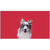 onde vende plataforma anti-afogamento canino Goianésia