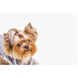 onde vende plataforma anti-afogamento cão Ermelino Matarazzo