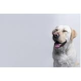 onde vende plataforma anti-afogamento para cachorro filhote Belo Horizonte
