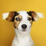 onde vende plataforma anti-afogamento para cães Rio Verde