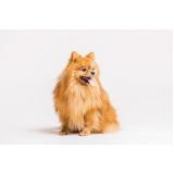 plataforma anti-afogamento canino Barueri