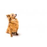 plataforma anti-afogamento de cão preço Louveira
