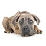 plataforma anti-afogamento para cachorro filhote preço Penha