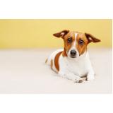 plataforma anti-afogamento para cachorro preço Higienópolis