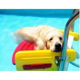 plataforma anti-afogamento para cães Jurubatuba