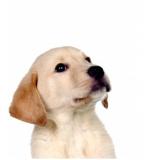plataforma anti-afogamento canino