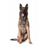 plataforma anti-afogamento de cão