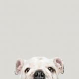 plataforma anti-afogamento para cães