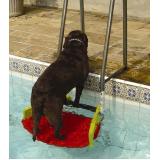 plataforma para piscinas anti-afogamento de cães