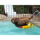 plataforma para piscinas anti-afogamento de cão Santa Efigênia