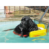 plataformas anti-afogamento canino Nova Piraju