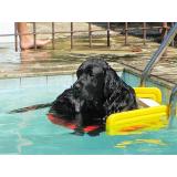 plataformas anti-afogamento de cão Parque Dom Pedro