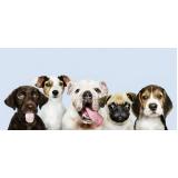 plataformas anti-afogamento para cachorro Brooklin