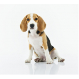 plataformas anti-afogamento para cães José Bonifácio