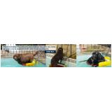 plataforma de piscina para cachorro